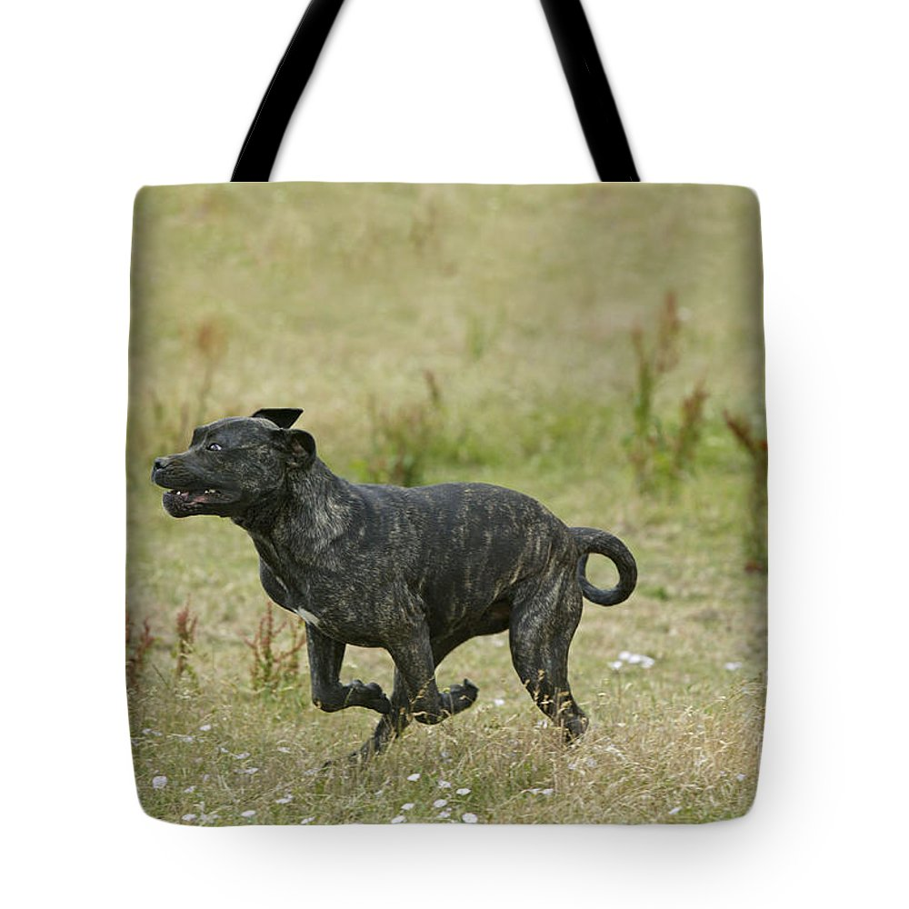 Canary Dog Tote Bag featuring the photograph Canary Dog Running by Jean-Michel Labat