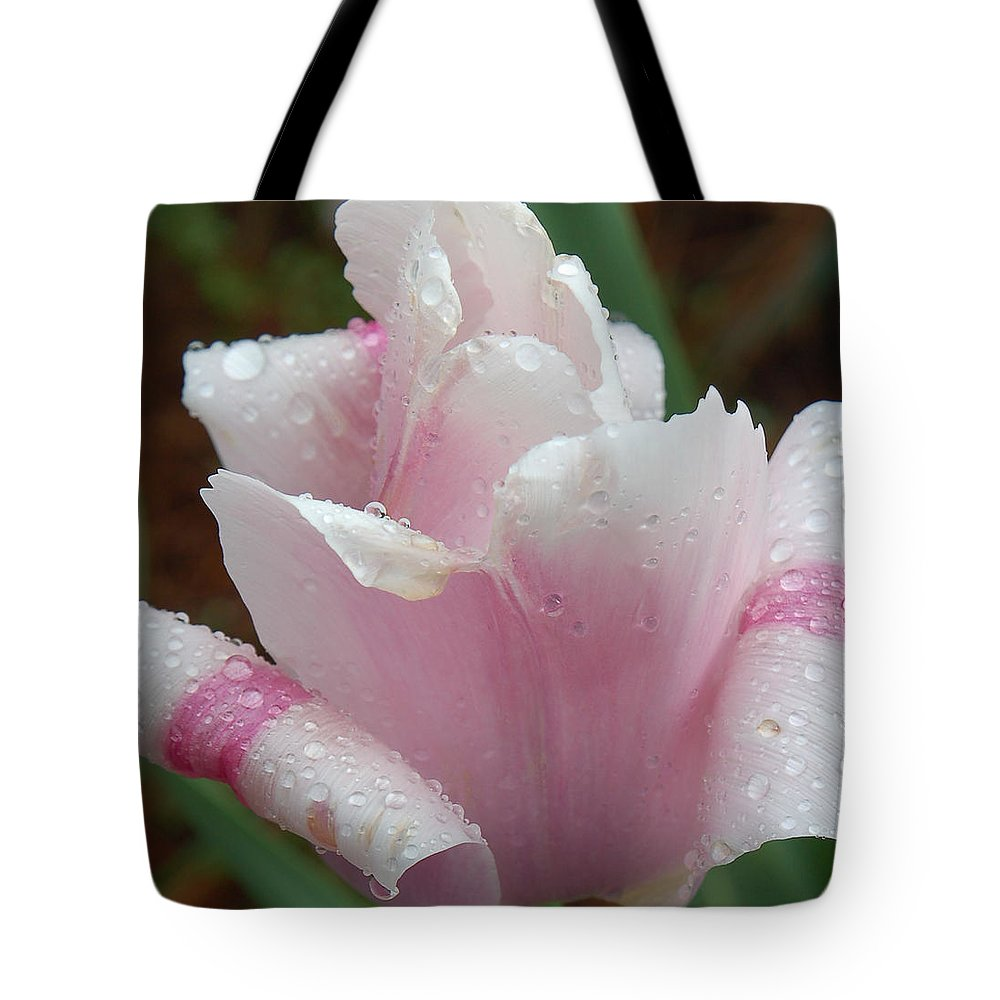 Pink Tulip Tote Bag featuring the photograph Candy Striper by Suzanne Gaff