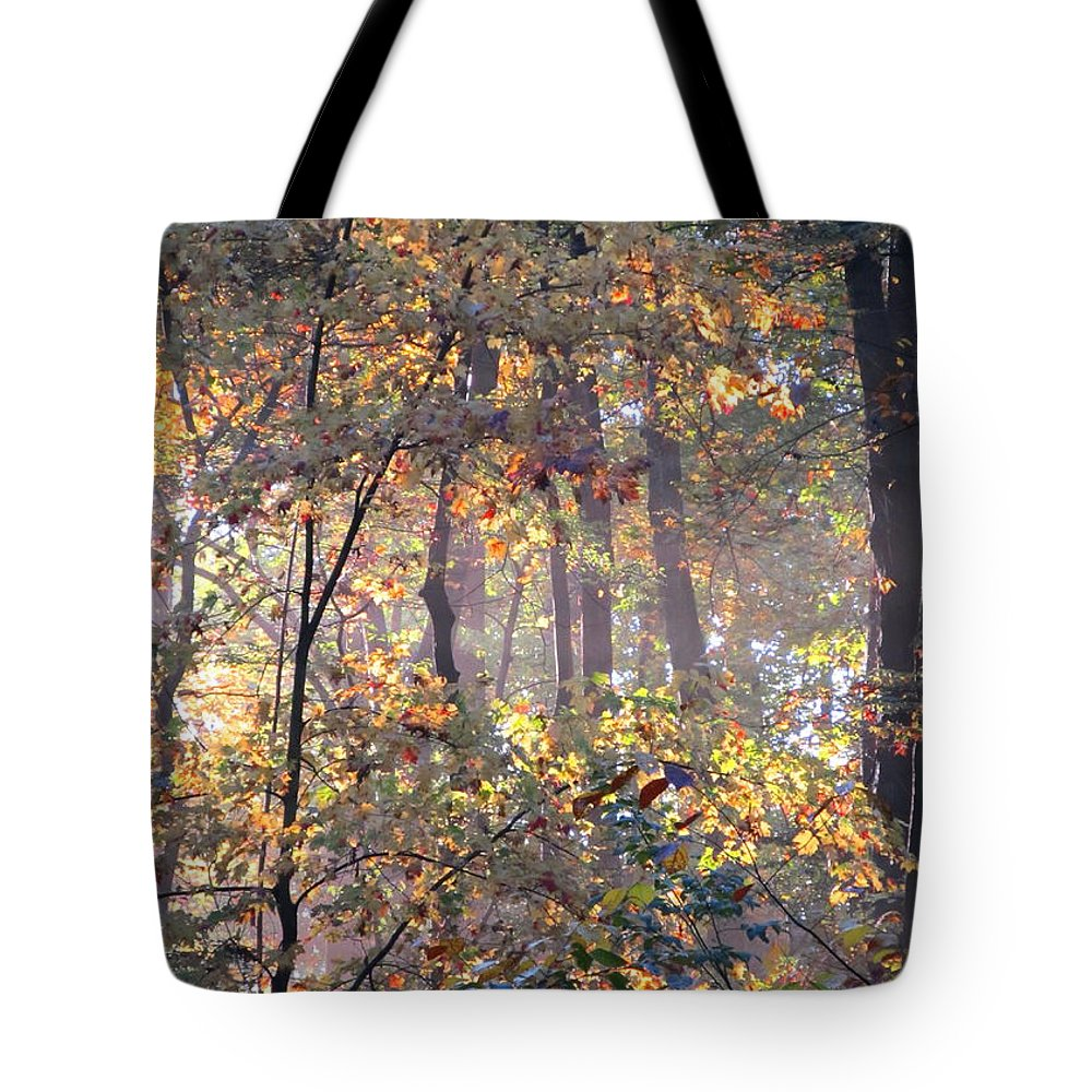 Forest Light Images Woodland Landscapes Forest Photography Images Misty Light Forest Glow Forest Sunrise Misty Morning Forest Canopy Collage Seasonal Forest Prints Nature Prints Nature Photography Autumn Leaves Golden Leaves Arborial Illumination Naturalist Natural Science Scenery Natural Light Forest Fog Fall Forest Indian Summer Prints Maryland Forest Outdoors Maryland Outdoor Recreation Environmental Education Oldgrowth Forest Biodiversity Preservation Wildlife Habitat Conservation Natural Tote Bag featuring the photograph Canopy Collage by Joshua Bales