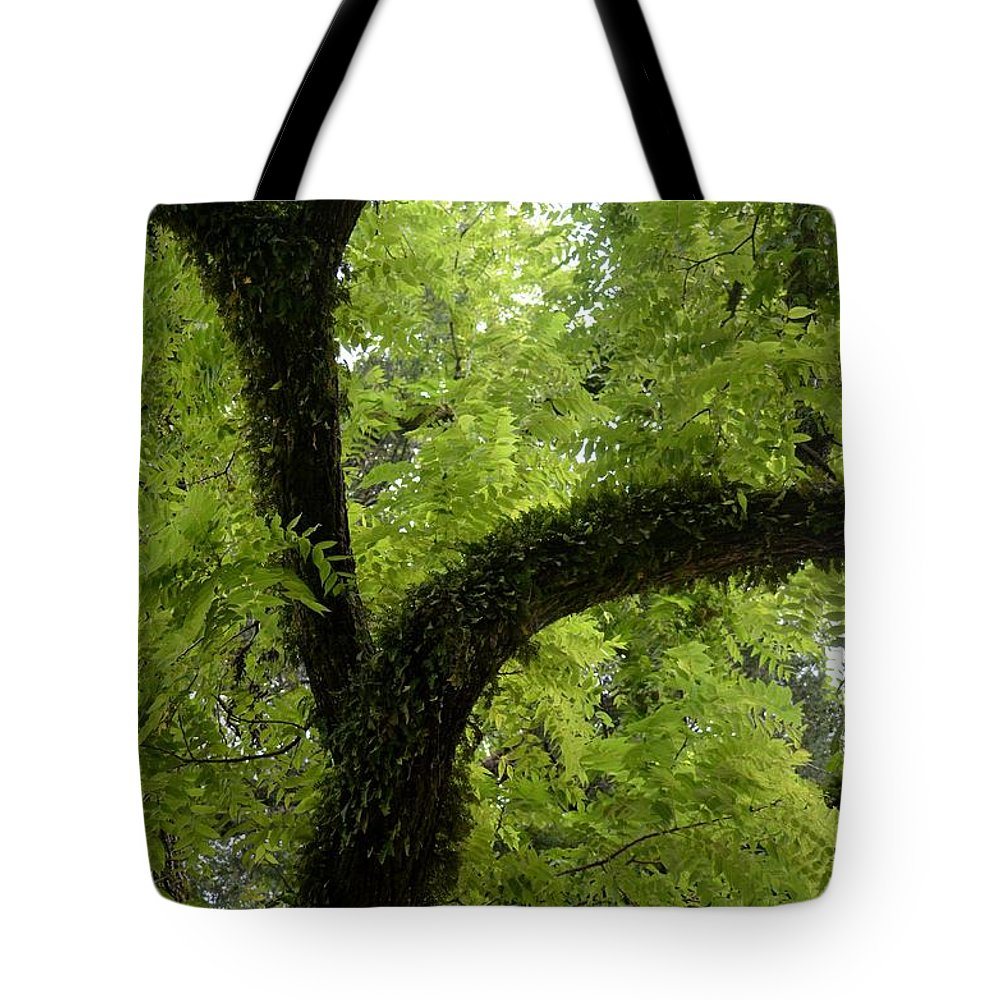 Canopy Of Cedar Elm Tote Bag featuring the photograph Canopy Of Cedar Elm by Maria Urso