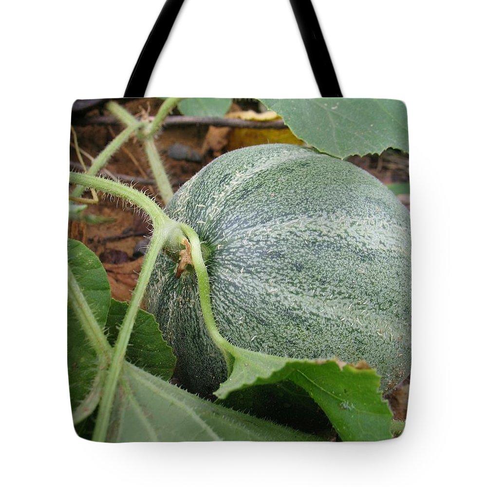 Cantaloupe Tote Bag featuring the photograph Cantaloupe by Jennifer Wheatley Wolf
