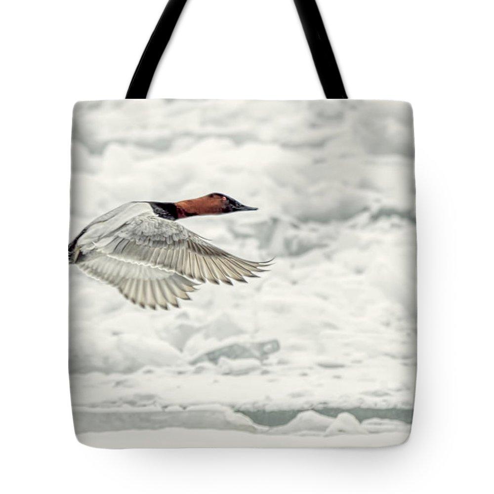 Canvasback Duck In Flight Tote Bag featuring the photograph Canvasback Duck In Flight by LeeAnn McLaneGoetz McLaneGoetzStudioLLCcom