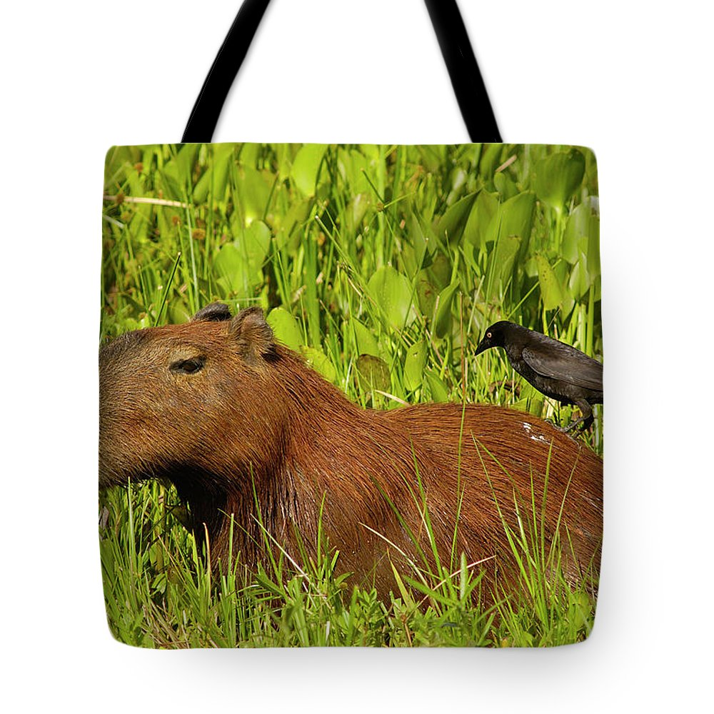 00217428 Tote Bag featuring the photograph Capybara And Smooth Billed Ani by Pete Oxford