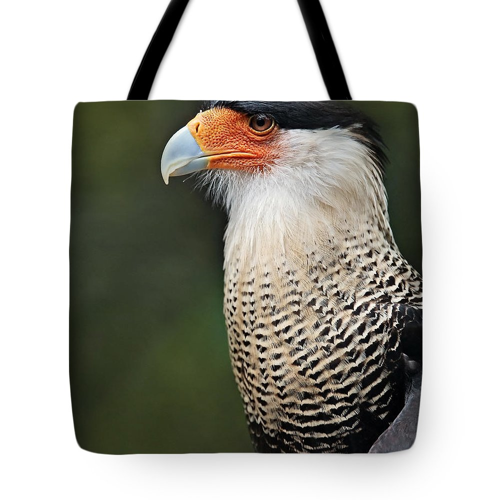 Animals Tote Bag featuring the photograph Caracara by Susan Candelario