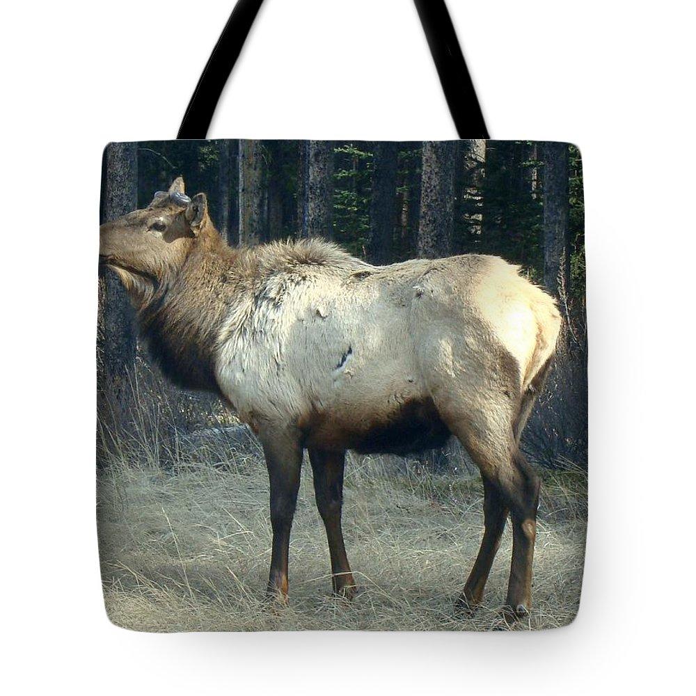 Elk Tote Bag featuring the photograph Elk Side Profile - Banff, Alberta by Ian Mcadie
