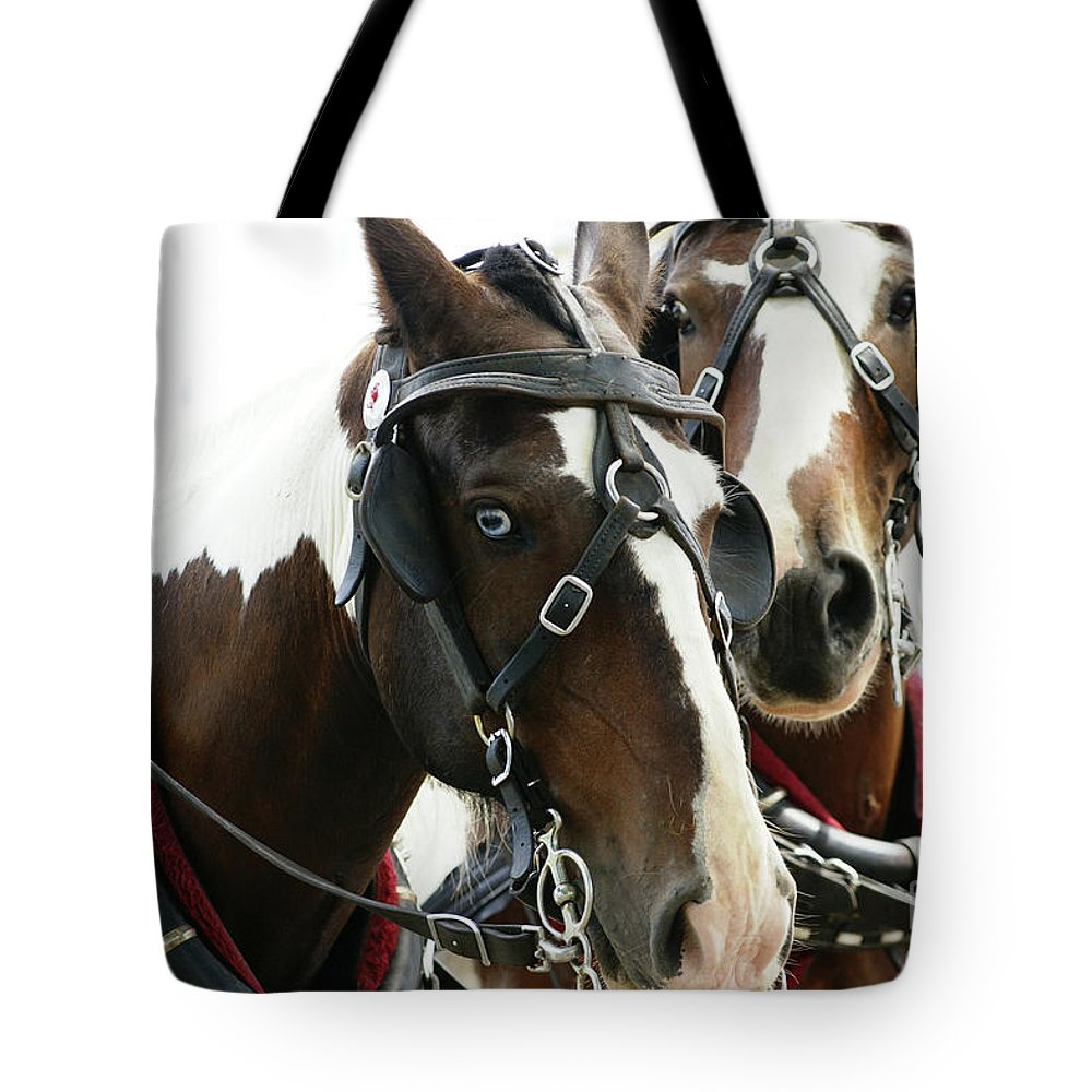 Carriage Tote Bag featuring the photograph Carriage Horse - 2 by Linda Shafer