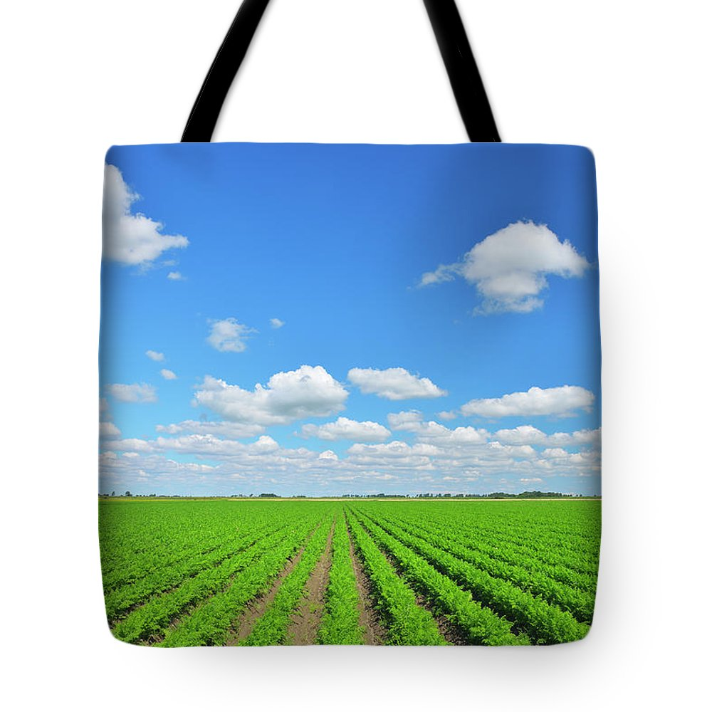 Tranquility Tote Bag featuring the photograph Carrot Field by Raimund Linke