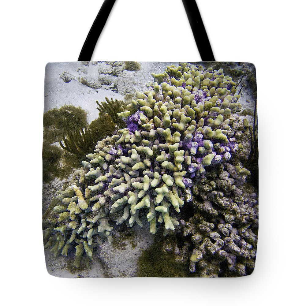 Ocean Tote Bag featuring the photograph Cascade by Terry Melius