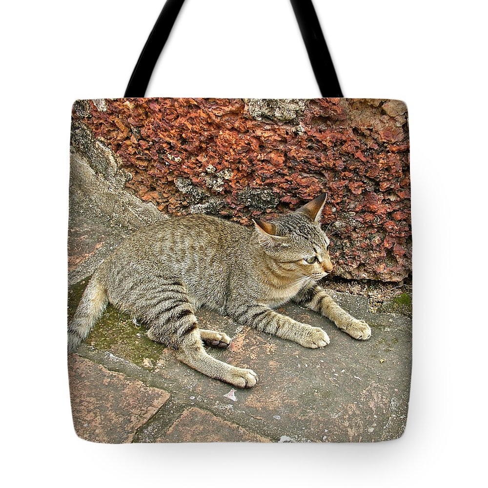 Cat At Wat Mahathat In 13th Century Sukhothai Historical Park Tote Bag featuring the photograph Cat At Wat Mahathat In 13th Century Sukhothai Historical Park-th by Ruth Hager