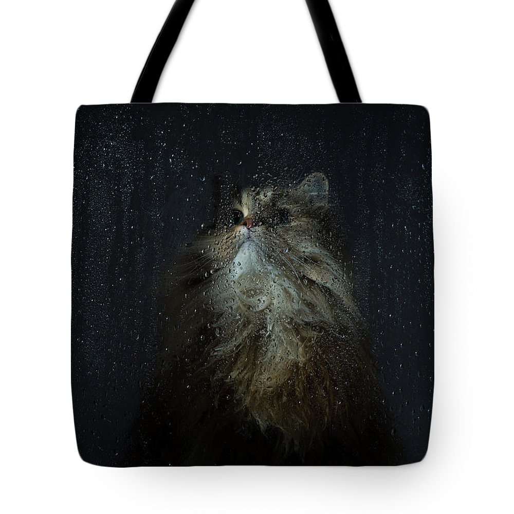 Pets Tote Bag featuring the photograph Cat By Rainy Window by Benjamin Torode