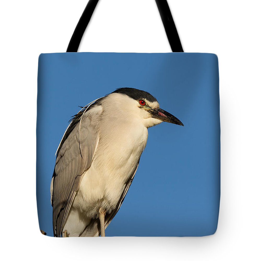 Black-crowned Night Heron Tote Bag featuring the photograph Cat Does Not Have His Tongue by Kathleen Bishop