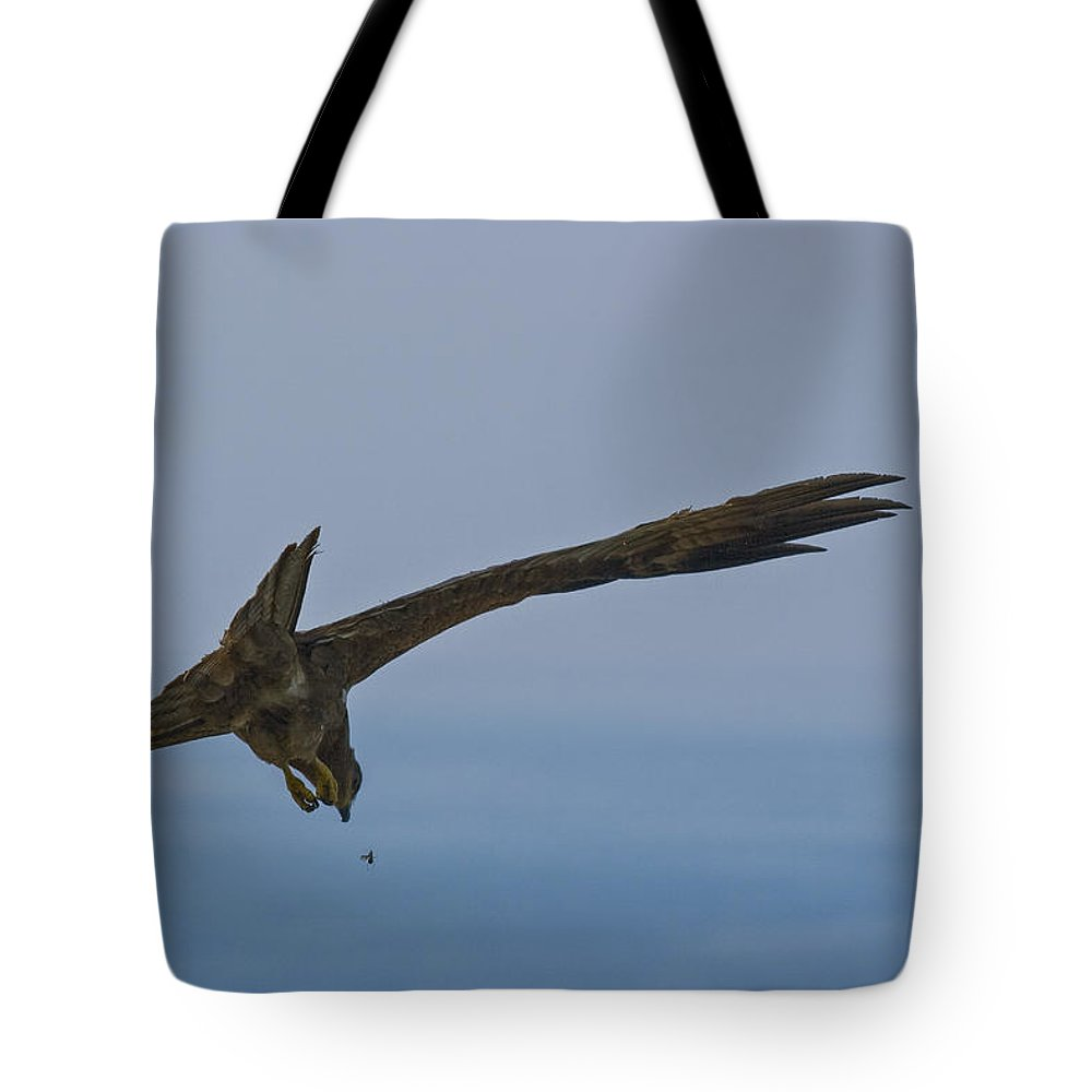 Birds Tote Bag featuring the photograph Catching Bugs by Sonny Marcyan