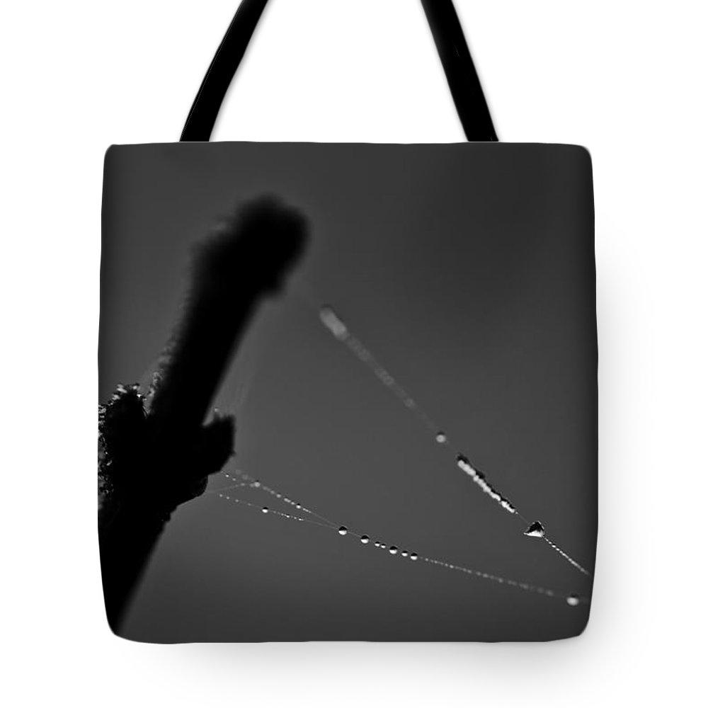 Web Tote Bag featuring the photograph Cats In The Cradle by Susan Capuano