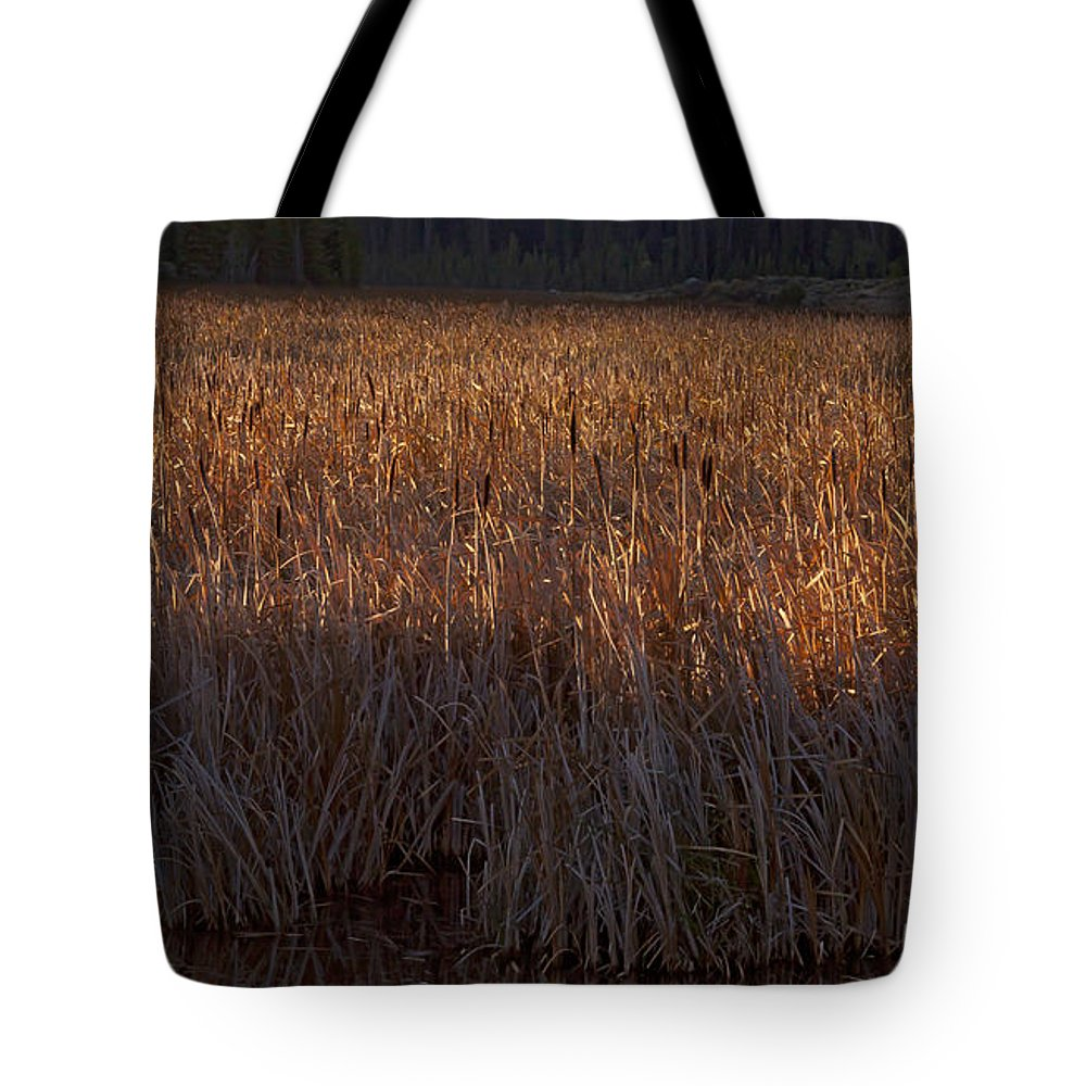 Cattails Tote Bag featuring the photograph Cattail Bog  #3868 by J L Woody Wooden