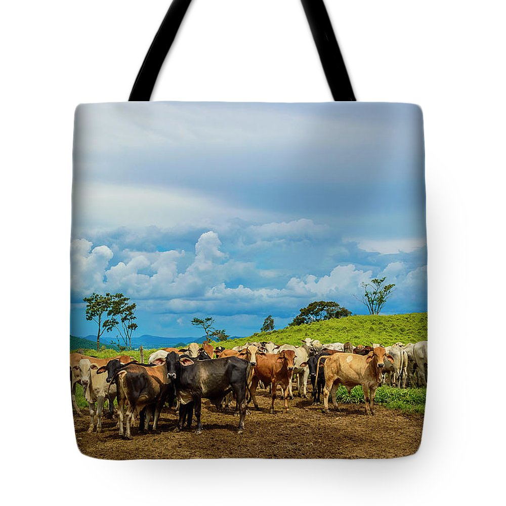 Grass Tote Bag featuring the photograph Cattle by Kcris Ramos