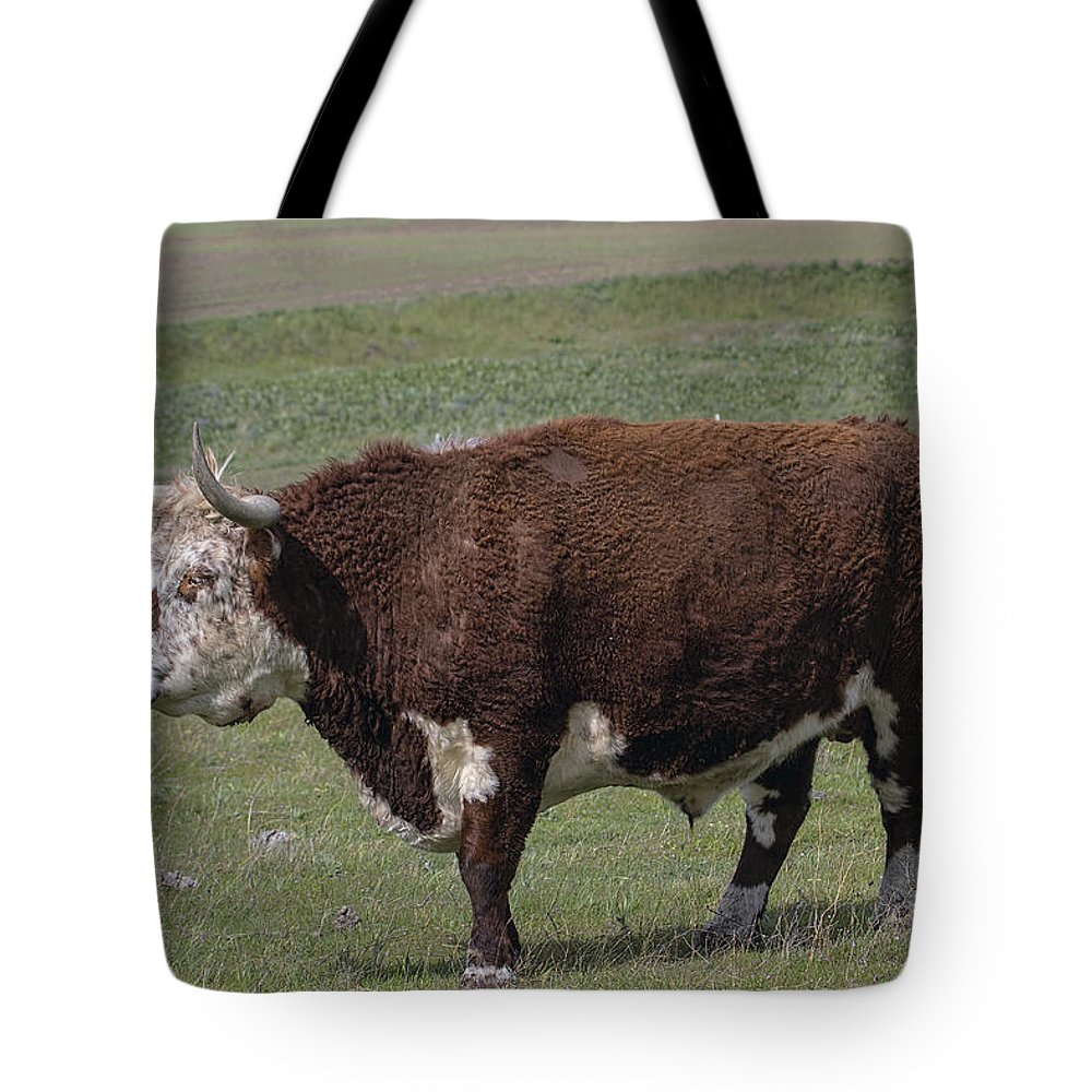 Cattle Tote Bag featuring the photograph Cattle With Horns Full Body Portrait by Jit Lim