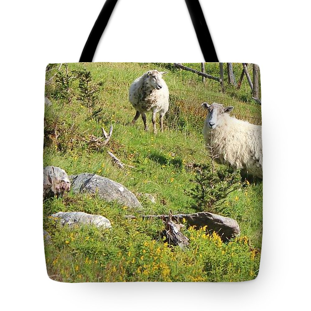 Cautious Sheep In The Pasture Tote Bag featuring the photograph Cautious Sheep In The Pasture by Barbara Griffin