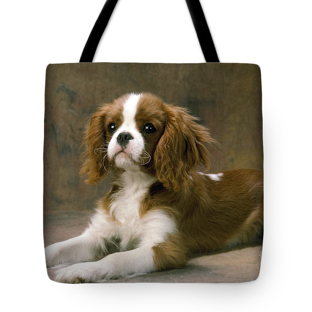 Cavalier King Charles Tote Bag featuring the photograph Cavalier King Charles Spaniel Dog Lying by John Daniels