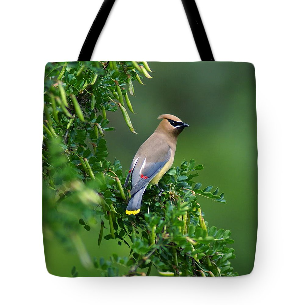 Birds Tote Bag featuring the photograph Cedar Waxwing 2 by Ben Upham III