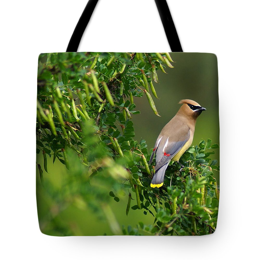 Birds Tote Bag featuring the photograph Cedar Waxwing 3 by Ben Upham III