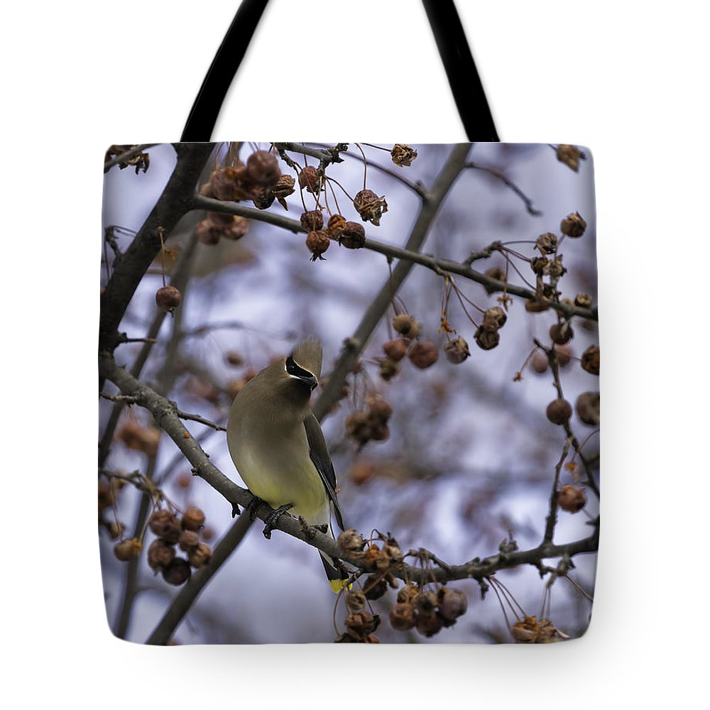 Cedar Waxwing Tote Bag featuring the photograph Cedar Waxwing Eating Berries 11 by Thomas Young