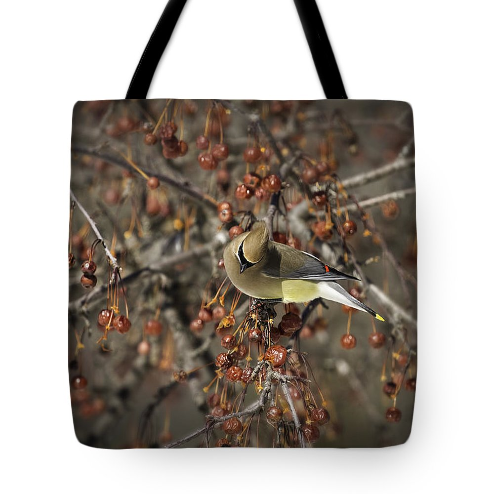 Cedar Waxwing Tote Bag featuring the photograph Cedar Waxwing Eating Berries 5 by Thomas Young