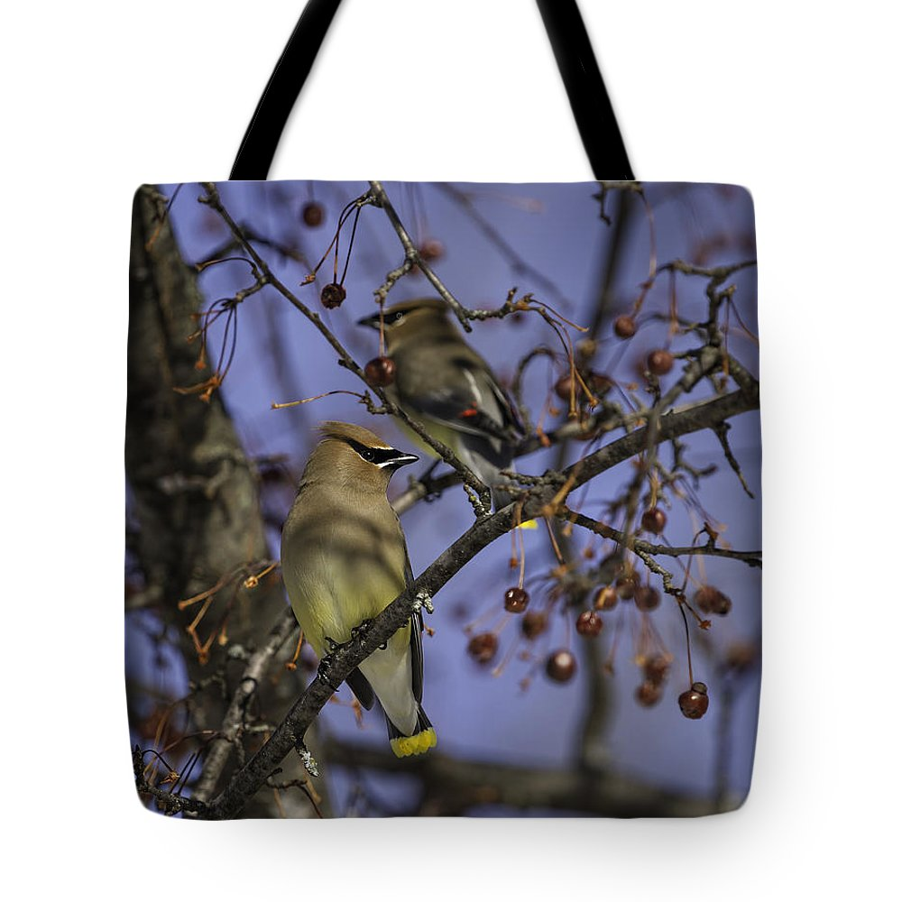 Cedar Waxwing Tote Bag featuring the photograph Cedar Waxwing Eating Berries 9 by Thomas Young