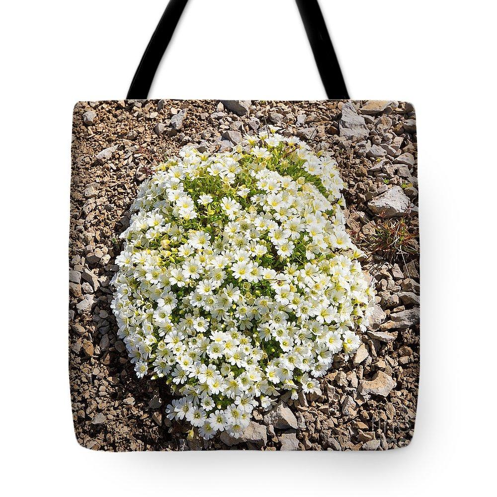 Background Tote Bag featuring the photograph Cerastium Uniflorum by Antonio Scarpi