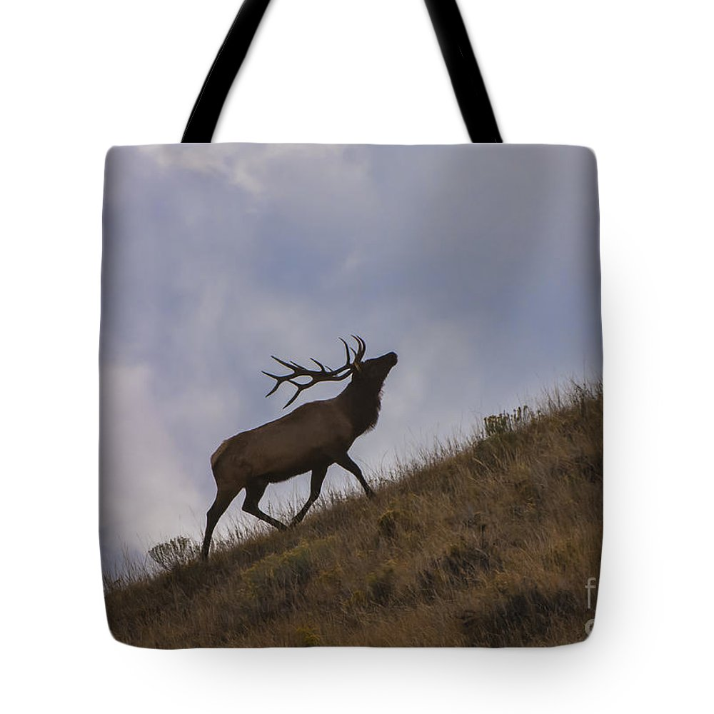 Wildlife Tote Bag featuring the photograph Challenge Of The Bull Elk by Sandra Bronstein