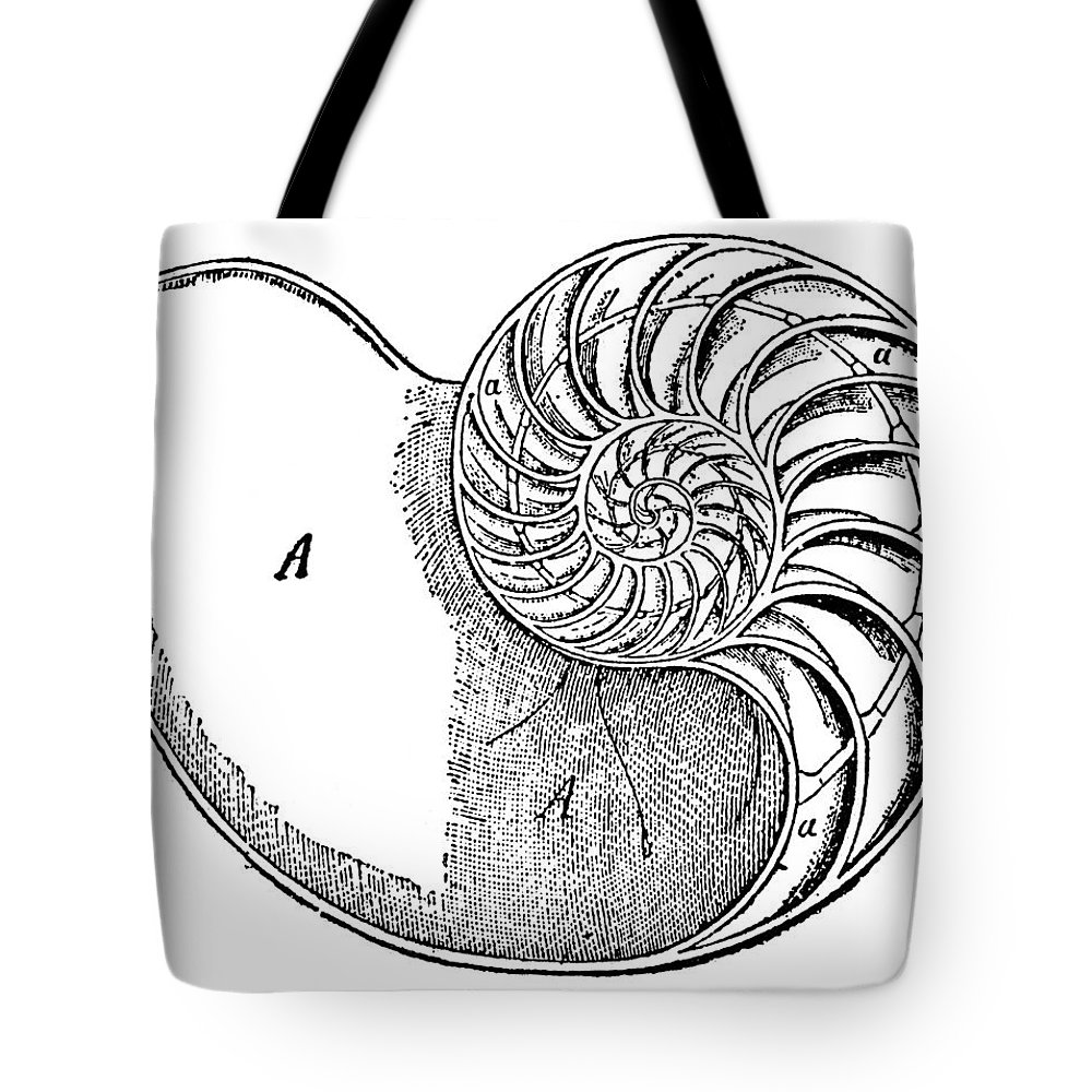 Aquatic Tote Bag featuring the photograph Chambered Nautilus by Granger
