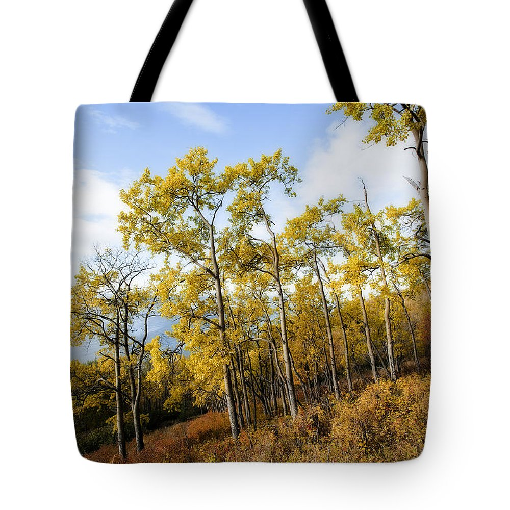 Fall Tote Bag featuring the photograph Changes by Ted Raynor