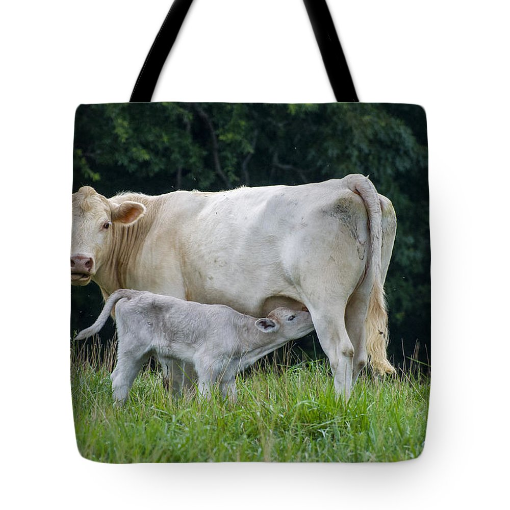 Cows Tote Bag featuring the photograph Charolais Cattle Nursing Young by Chris Flees