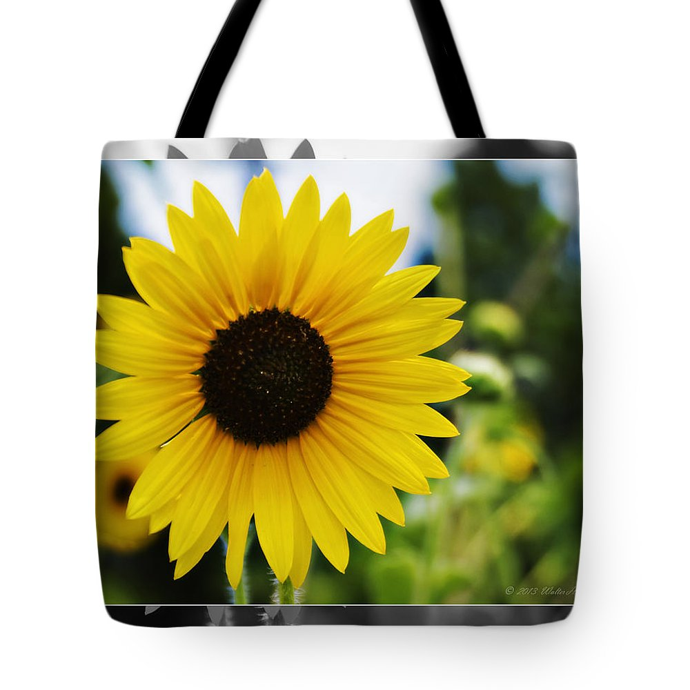 Kansas State Flower Tote Bag featuring the photograph Chasing The Sun by Walter Herrit