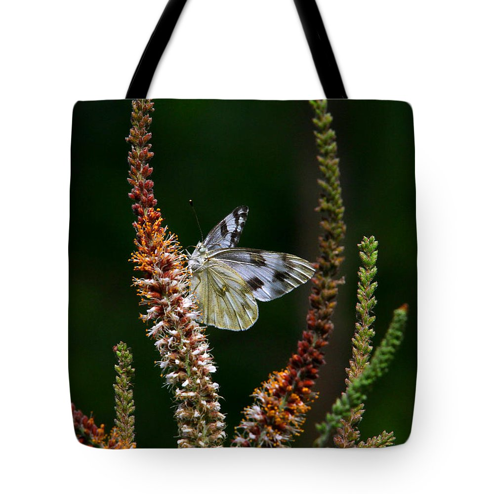Checkered White Butterfly Tote Bag featuring the photograph Checkered White On An Indigo by Barbara Bowen
