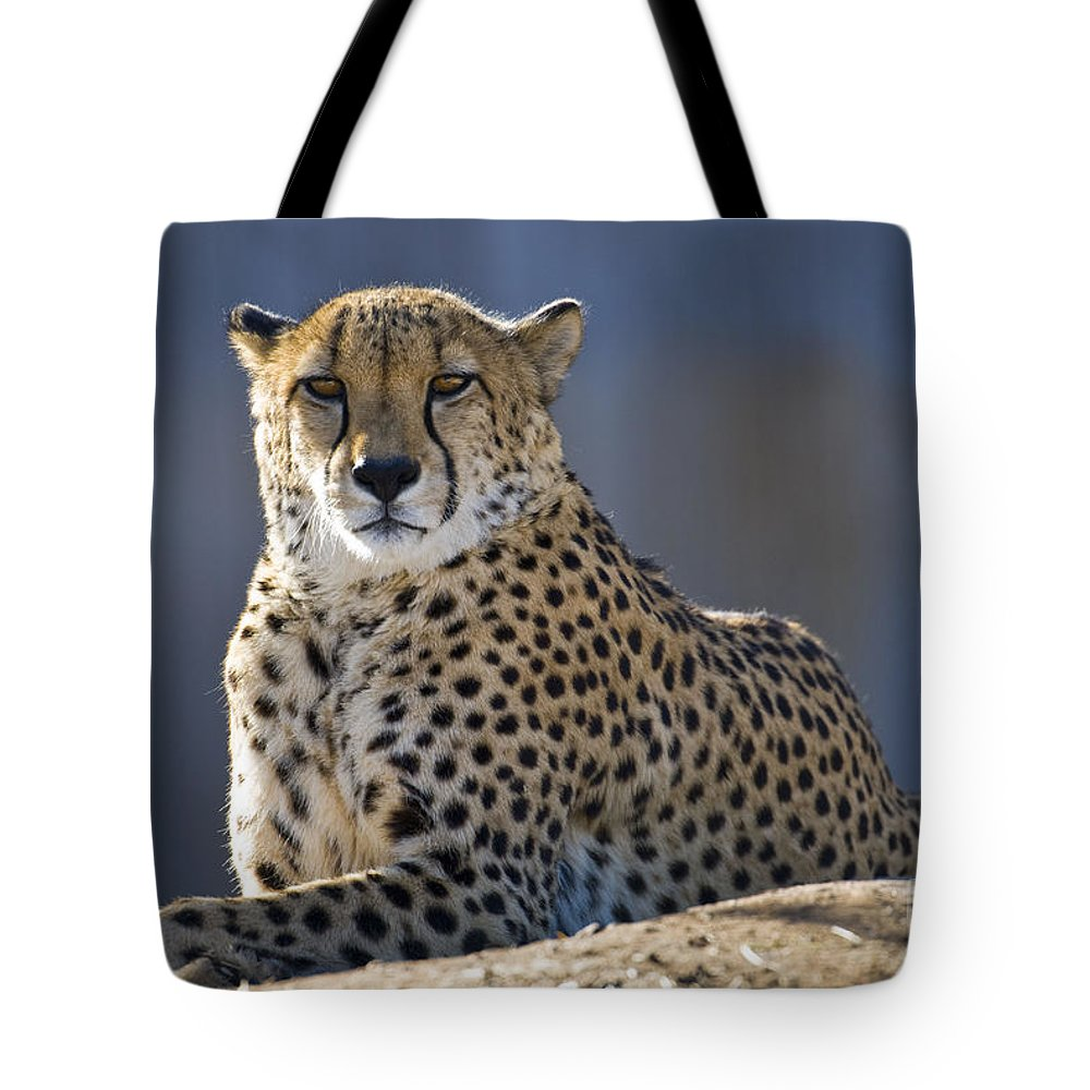Animal Tote Bag featuring the photograph Cheetah by Juli Scalzi