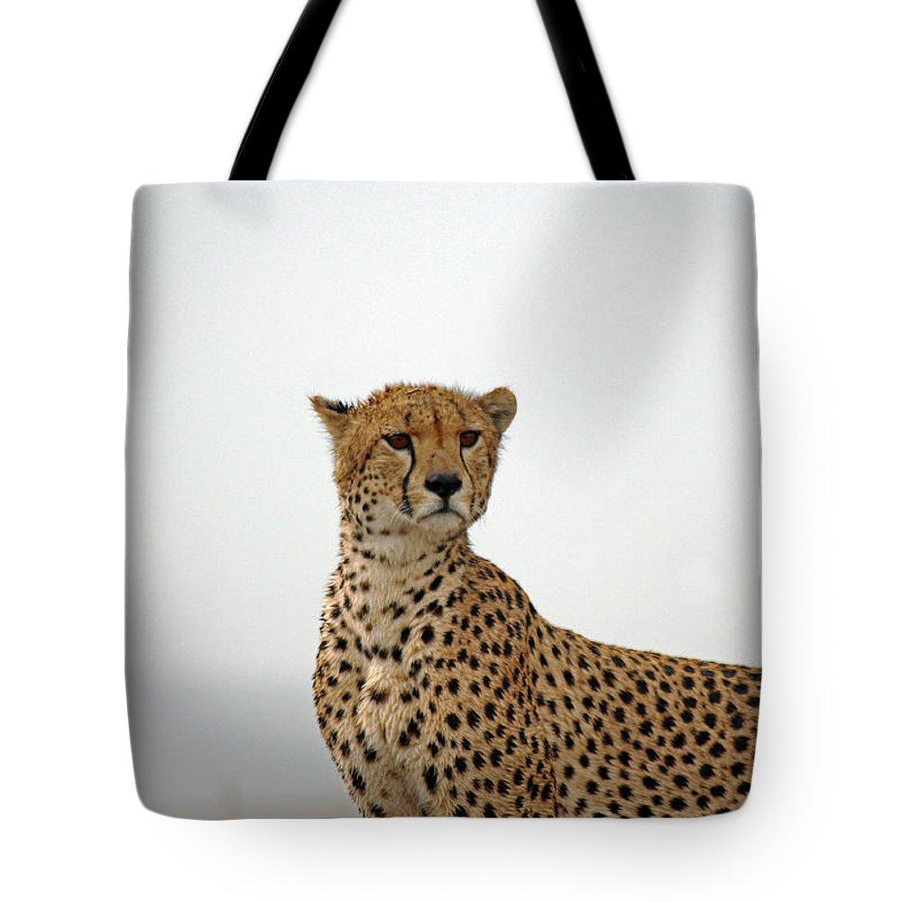 Cheetah Tote Bag featuring the photograph Cheetah In Serengeti. by Tony Murtagh
