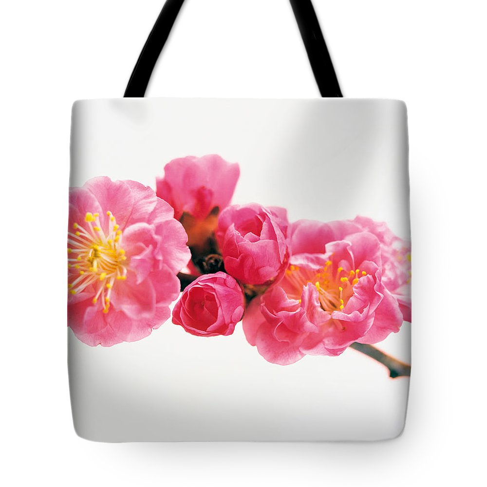 Photography Tote Bag featuring the photograph Cherry Blossom by Panoramic Images