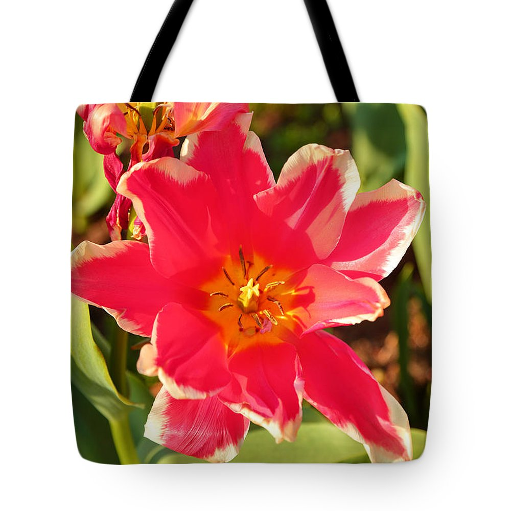 Architectural Tote Bag featuring the photograph Cherry Blossoms 2013 - 093 by Metro DC Photography