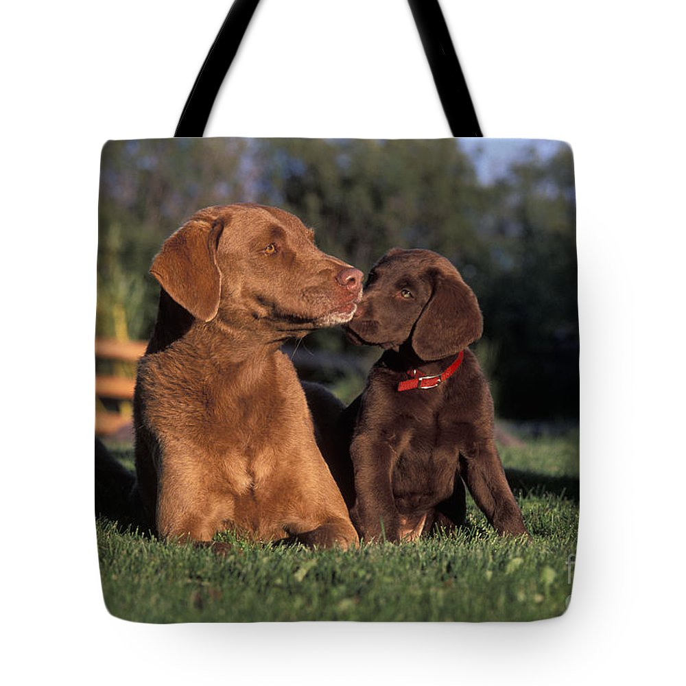 Dogs Tote Bag featuring the photograph Chesapeake Bay Retrievers by Rolf Kopfle