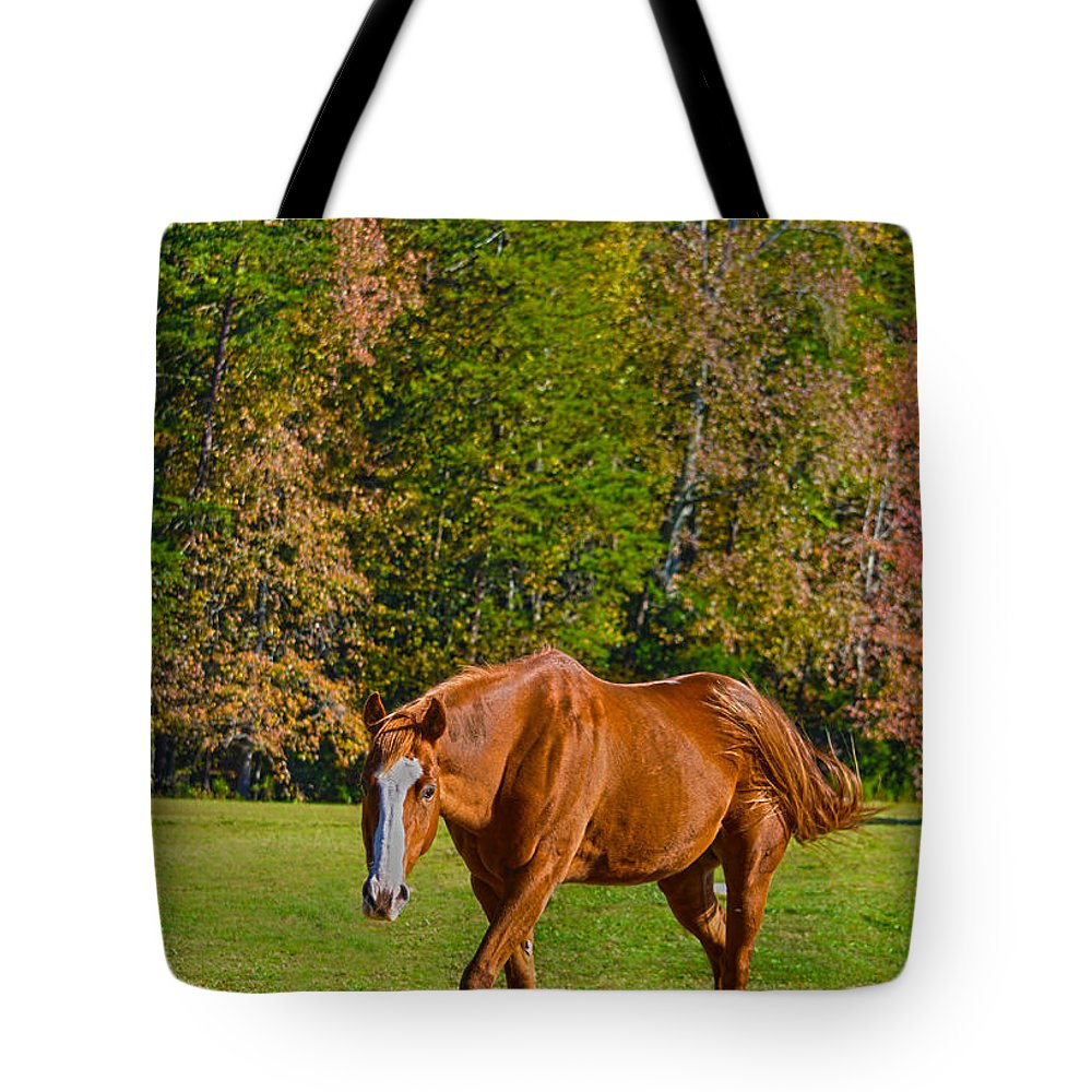 Horse Tote Bag featuring the photograph Chestnut Red Horse by Sandi OReilly