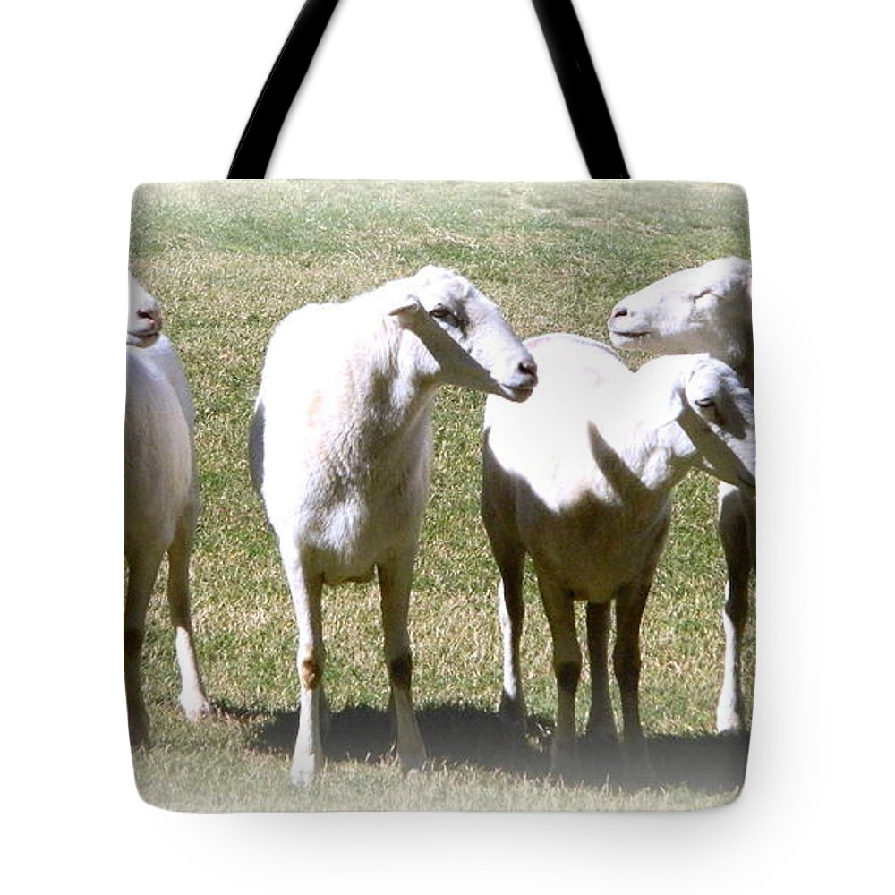 Animals Tote Bag featuring the photograph Cheviot Sheep 2 by Kathy Barney