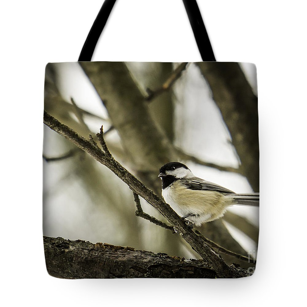 Chickadee Tote Bag featuring the photograph Chickadee by Brad Marzolf Photography