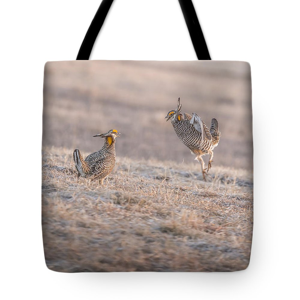 Wisconsin's Prairie Chicken Tote Bag featuring the photograph Chicken Fight by Thomas Young