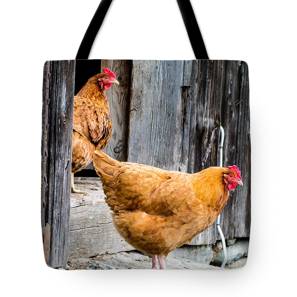 Chicken Rooster Farm Farm Yard Comb Feathers Farming Agriculture Tote Bag featuring the photograph Chickens At The Barn by Edward Fielding