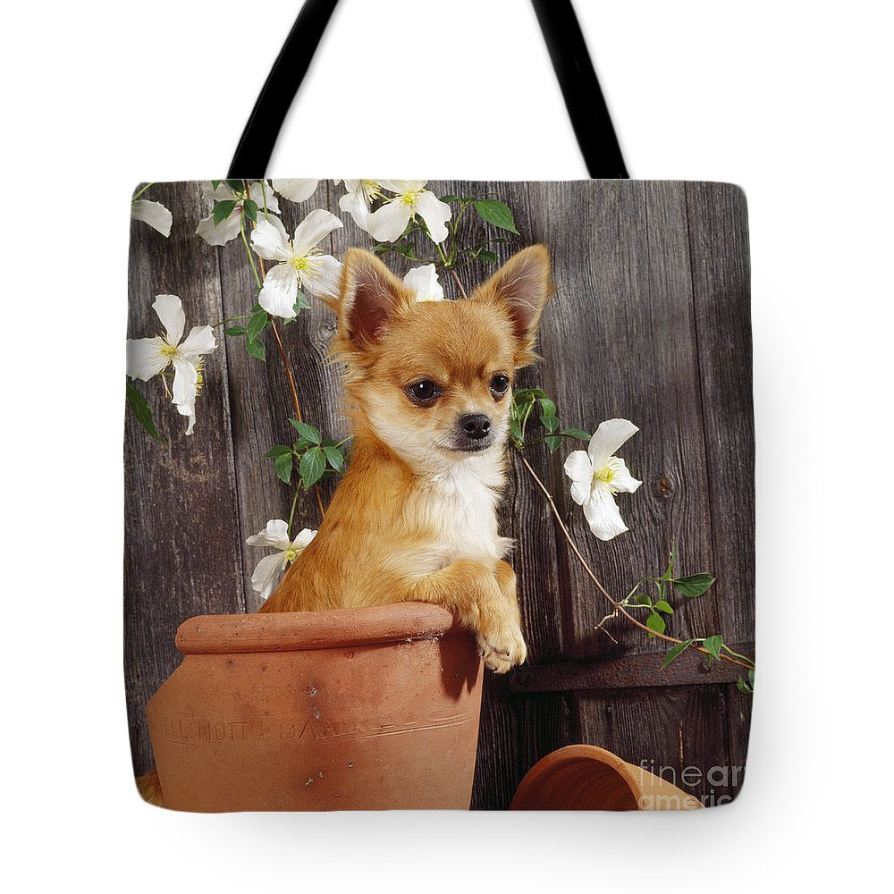 Chihuahua Tote Bag featuring the photograph Chihuahua Dog In Flowerpot by John Daniels