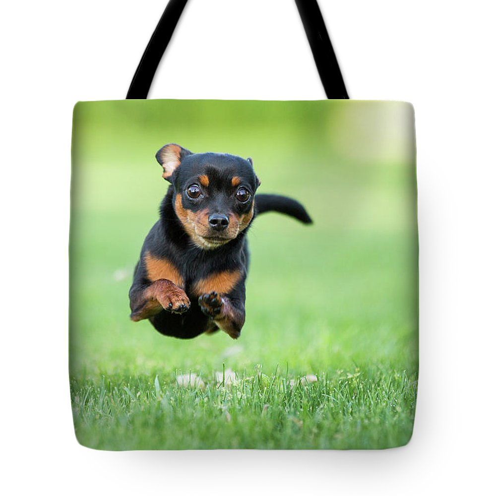 Pets Tote Bag featuring the photograph Chihuahua Dog Running by Purple Collar Pet Photography
