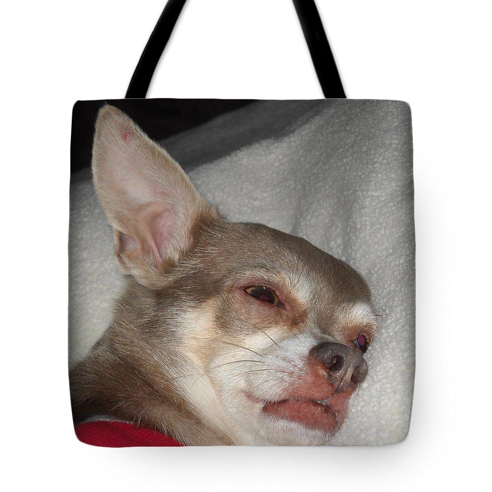Chihuahuas Tote Bag featuring the photograph Chihuahua Dreams by Leah Delano