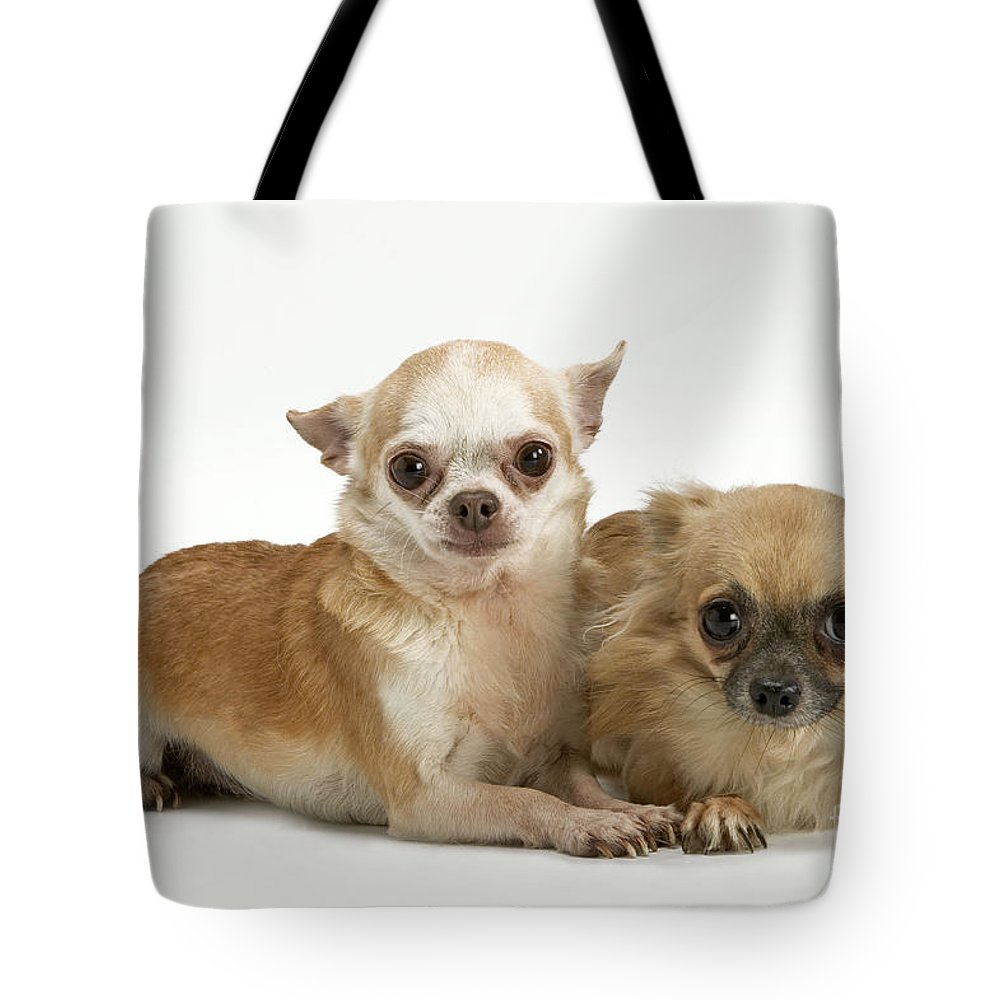 Long Coat Tote Bag featuring the photograph Chihuahua Puppy Dogs by Jean-Michel Labat