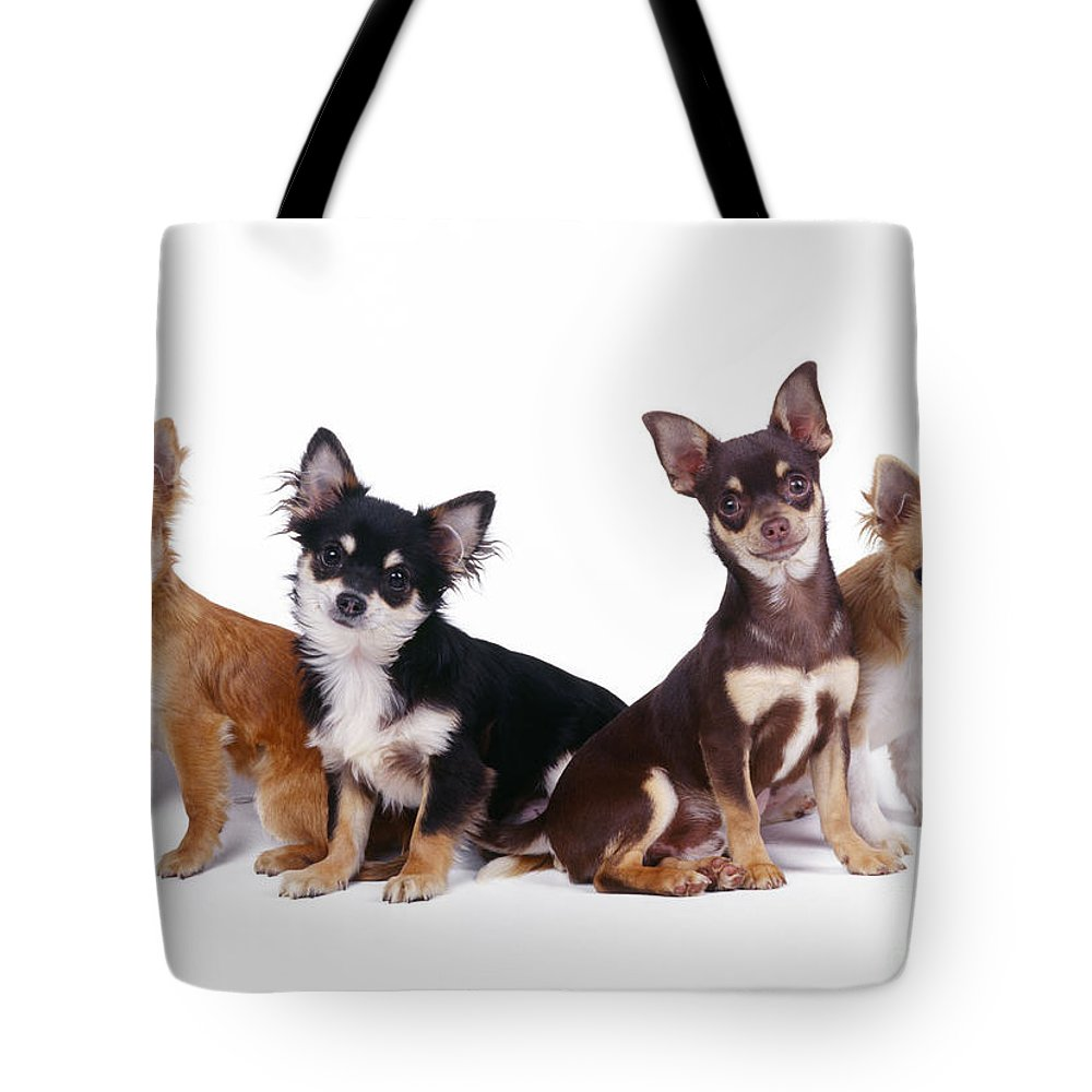 Chihuahua Tote Bag featuring the photograph Chihuahuas Dogs by John Daniels