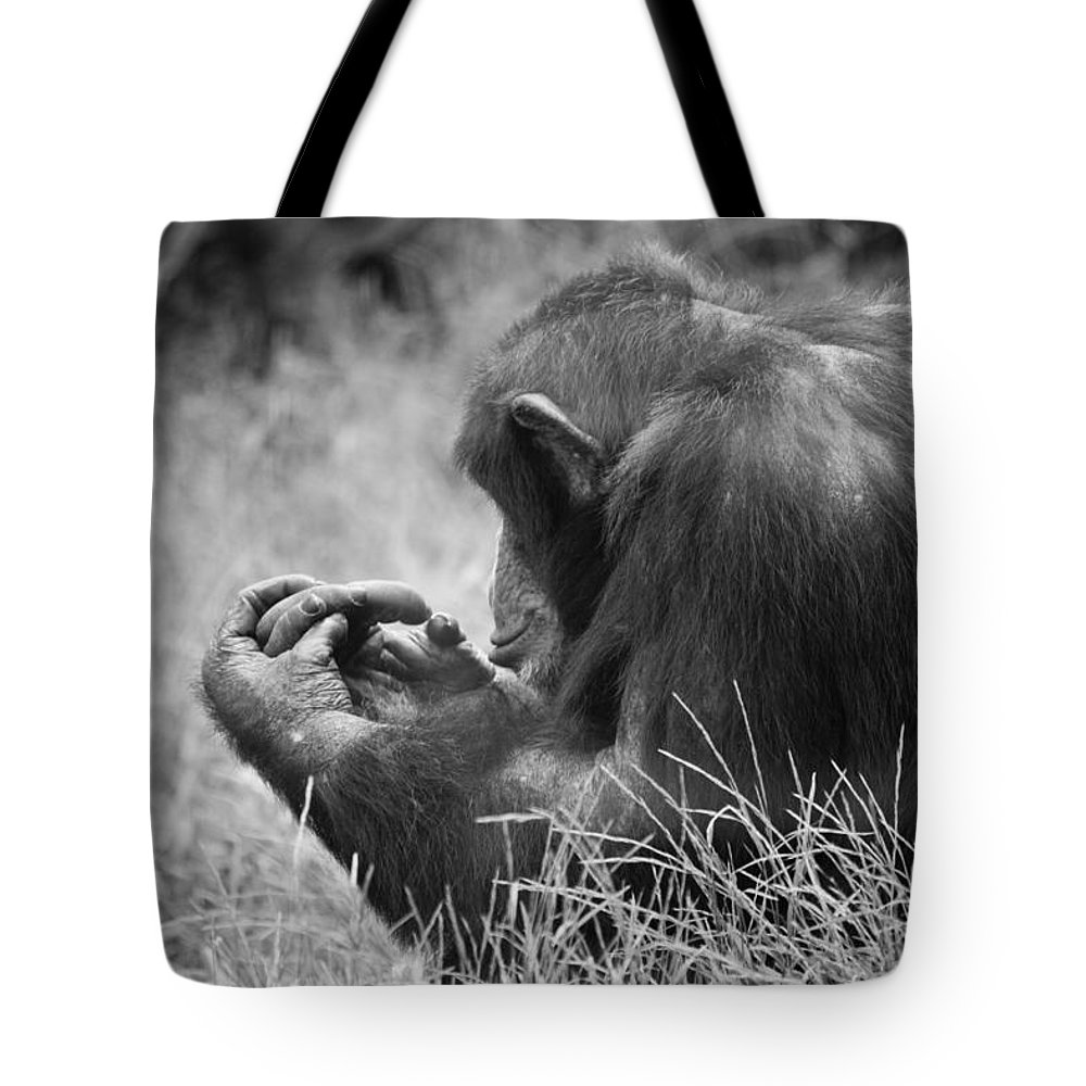 B&w Tote Bag featuring the photograph Chimpanzee In Thought by Jonny D